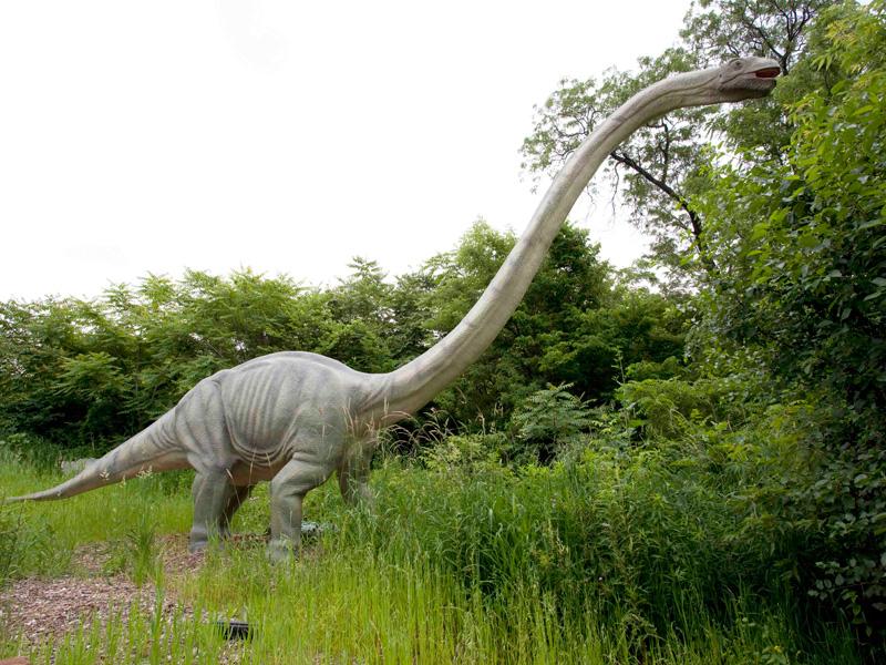 【動く・叫ぶ】マメンチサウルス