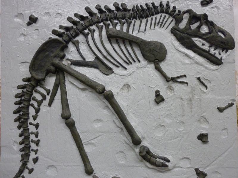【化石】地中に埋まった化石