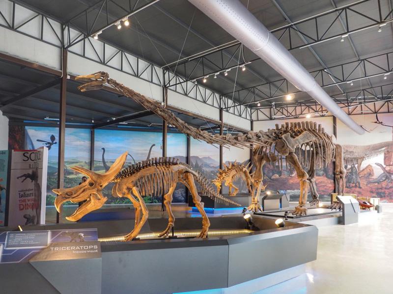 【化石】トリケラトプス
