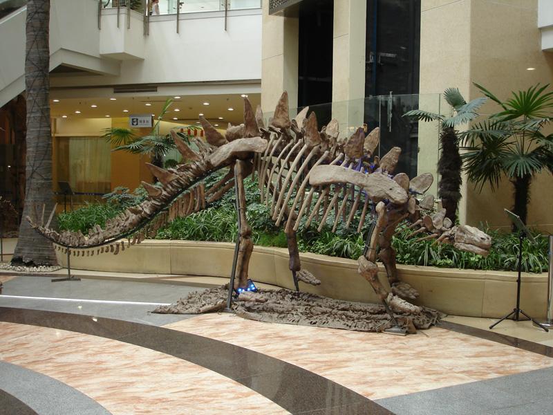 【化石】トゥオジャンゴサウルス
