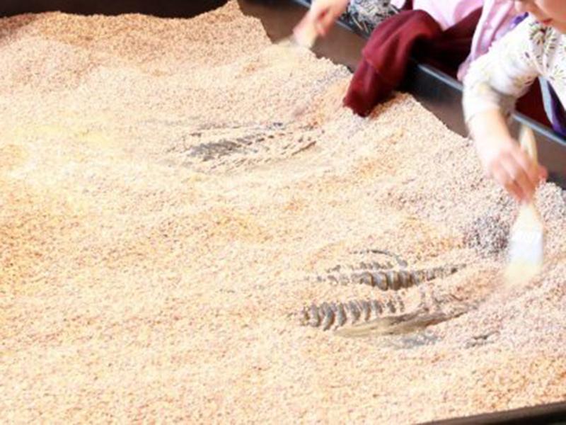 【化石】発掘体験