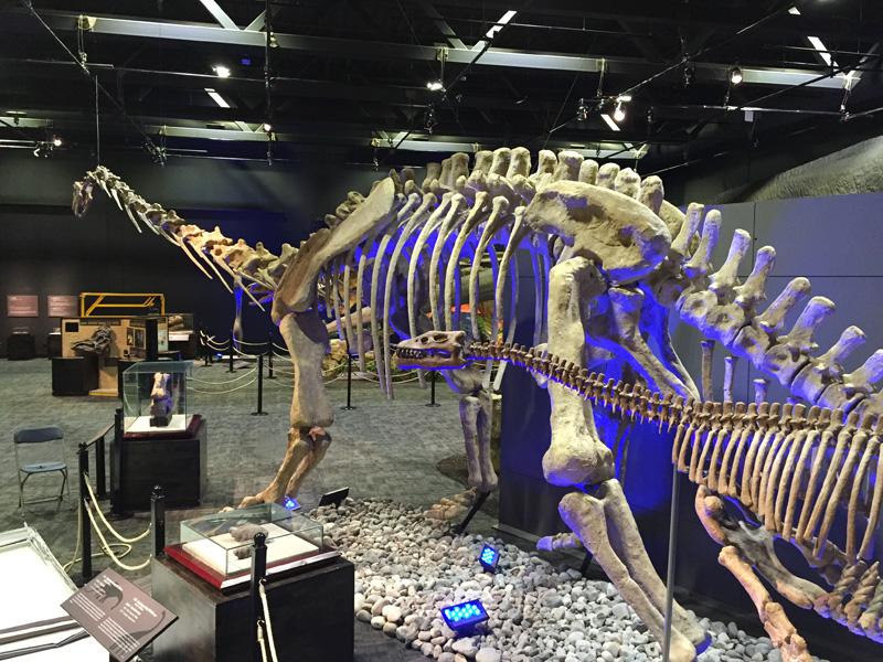 【化石】マメンチサウルス